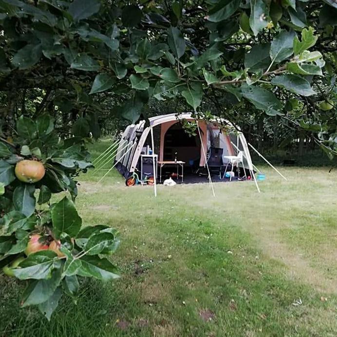 Tent in de boomgaard